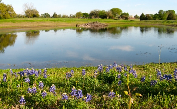 Washington County pond  and bluebonnets near Brenham