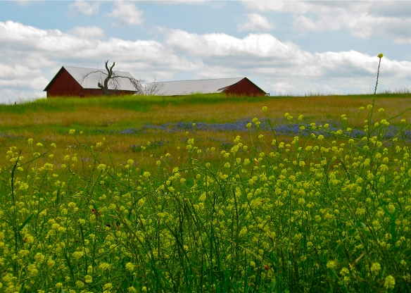 Washington County barns and wildflowers